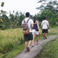short trekking through the rice fields