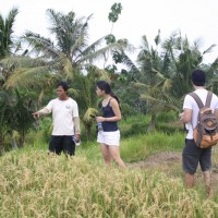 short trekking through the rice fields #2