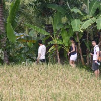 short trekking through the rice fields #3