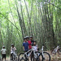 bamboo forest photo session