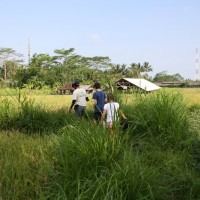 Walk through rice paddies