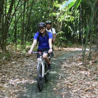ride through bamboo forest