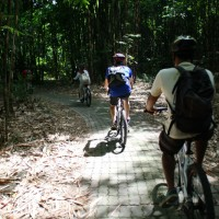 bamboo cycle trips