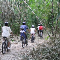 bamboo forest bike routes #1