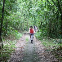 bamboo forest bike routes #2