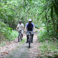 bamboo forest bike routes #4
