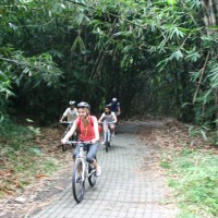 Leaving bamboo forest