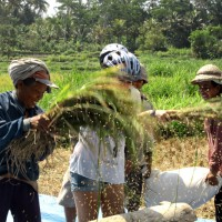 Joining Balinese farmers at works photo #6