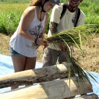 Joining Balinese farmers at works photo #5
