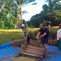 Joining Balinese farmers at works photo #7