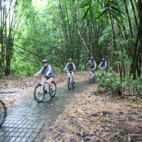 rainy biker inside bamboo forest