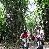 riding through bamboo forest