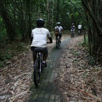 Cycle through bamboo forest with Brenda