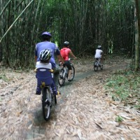 Cycle through bamboo forest with Davide