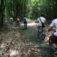 Cycle through bamboo forest with Justina