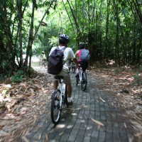 Bike trips inside bamboo forest with Catalina
