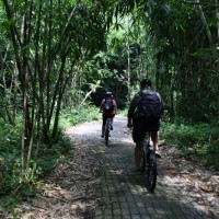 Bike trips inside bamboo forest with Andrew