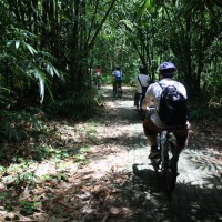 Bike trips inside bamboo forest with Malaysian group