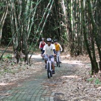 Fun bike trips inside the forest with Mike