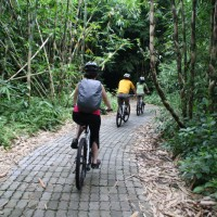 Forest bike trips with Shirley and friends