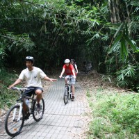 Forest bike trips with french family