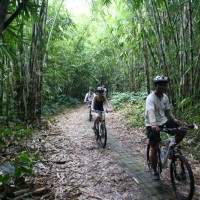 Forest bike trips with Brenda