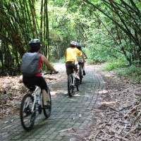 Bali hai bike in forest with Guzman