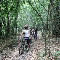 Forest cycling adventure