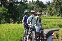 Rice paddies Bali cycling tracks photos #11