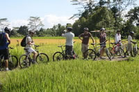 Rice paddies Bali cycling tracks photos #10