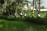Rice paddies Bali cycling tracks photos #4