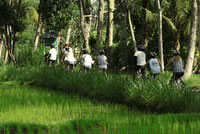 Rice paddies Bali cycling tracks photos #6