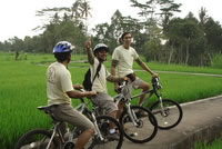 Rice paddies Bali cycling tracks photos #12