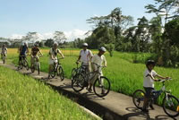 Rice paddies Bali cycling tracks photos #13
