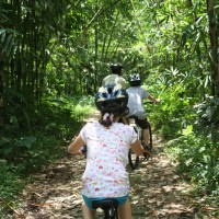 kid cycling inside bamboo forest