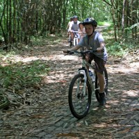 bamboo forest ride