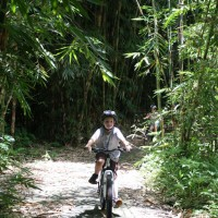 kid bike riding in bamboo forest