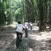 passing the bamboos