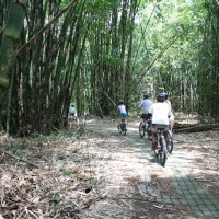 family bike tour in bamboo forest