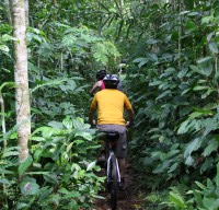 Ride through green plantation