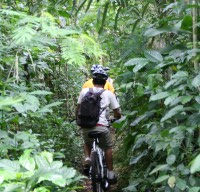 Ride through bush