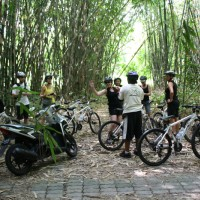 stopped at bamboo forest