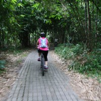 amazing bamboo forest cycling routes