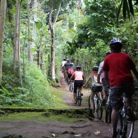 off road to bamboo forest