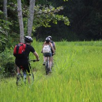 rice paddies cycling