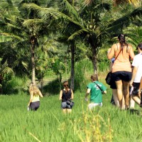 rice field trekking photo #05