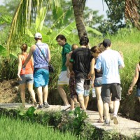rice field trekking photo #04