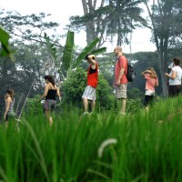 rice field trekking photo #14