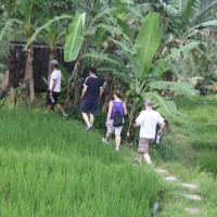 rice field trekking photo #18