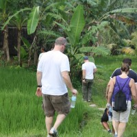 rice field trekking photo #19